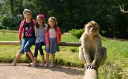 Trentham Monkey Forest near to Stoke-on-Trent