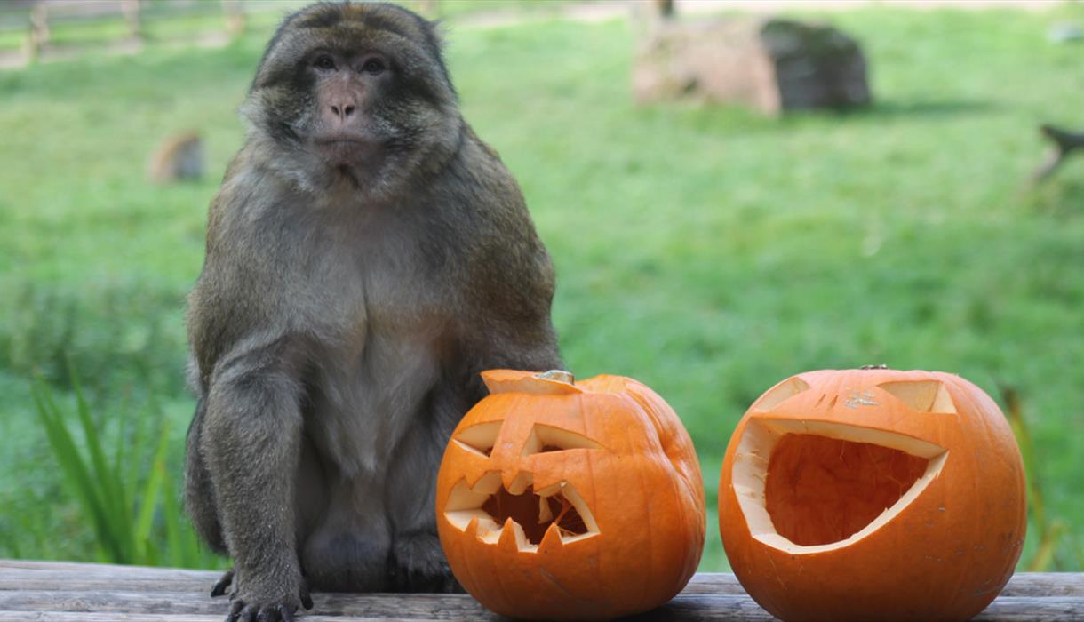 Half Term Spooktacular at Trentham Monkey Forest