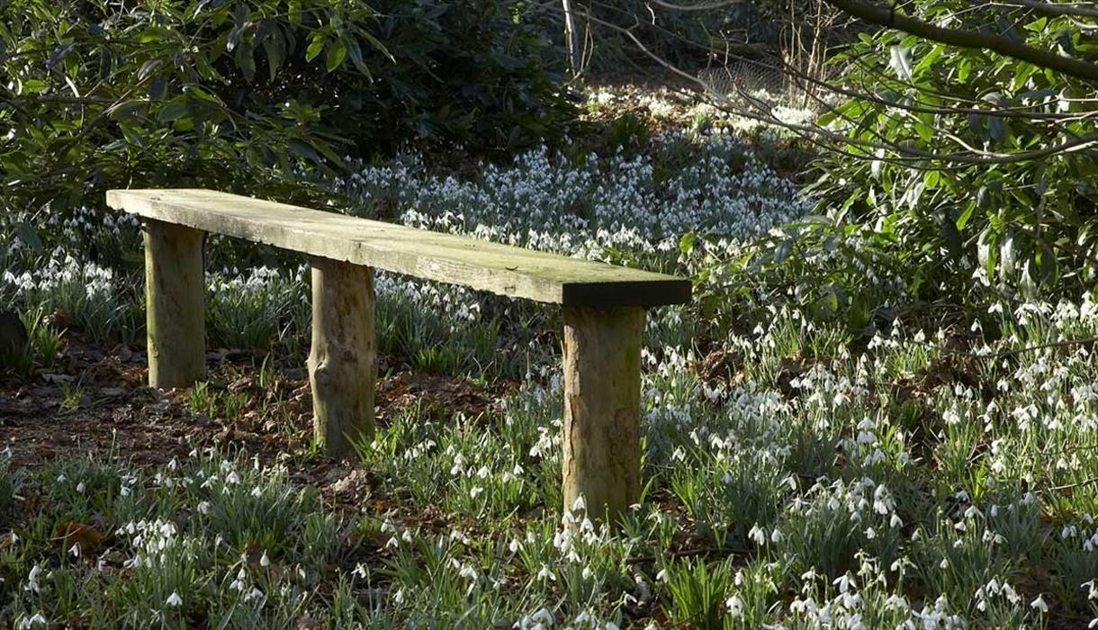seat amongst the snowdrops