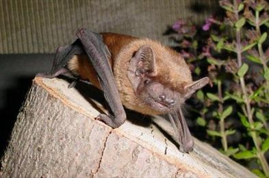 Staffordshire Bat Group at Trentham Monkey Forest